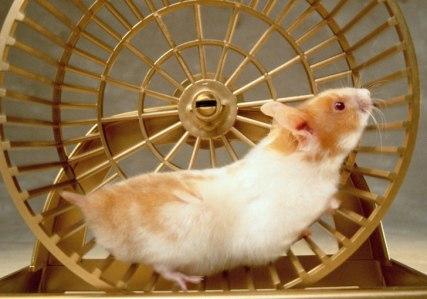 sansecretsofshine wordpress hamster