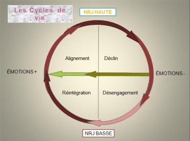les cycles de vie.jpg
