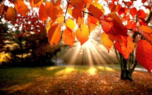 img-saison-automne1.jpg