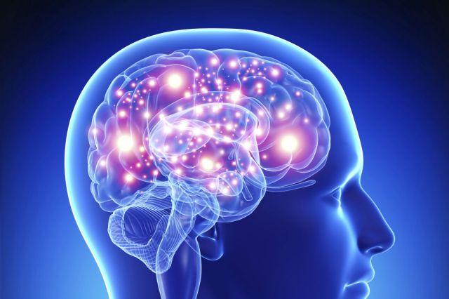 cerveau-inro.jpg